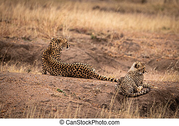 Cheetah and cub lying on earth mound