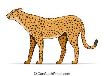 Cheetah animal standing on a white backgroundCheetah animal standing on a white background