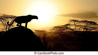Cheetah at sunset on Natioanl park in Kenya