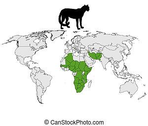 Cheetah distribution