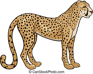 Cheetah - Vector illustration of a cheetah isolated on a...