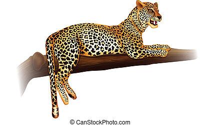 Illustration showing the cheetah