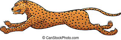 Cheetah  - Vector illustration