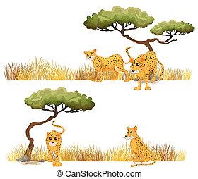 Cheetah in the field