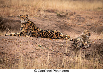 Cheetah lies beside cub on earth mound