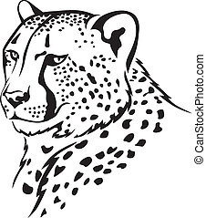 The contour image of the cheetah's muzzle