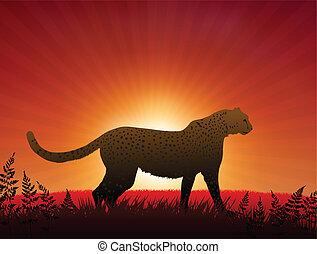 Cheetah on Sunset Background