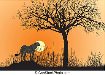 cheetah, ondergaande zon