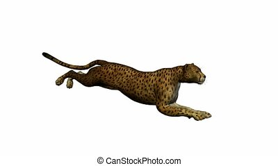Cheetah running on a white background