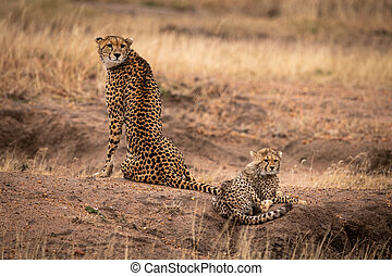 Cheetah sits beside cub on earth mound