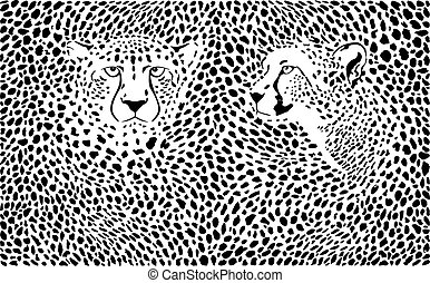 Cheetahs background with heads