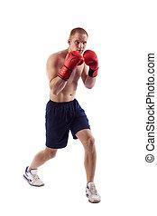 cheio, sobre, jovem, isolado, comprimento, pugilista, flexionar, fundo, retrato, músculos, macho, branca