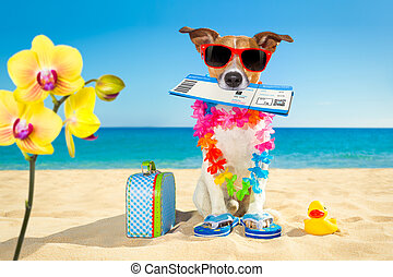 chek in boarding pass summer dog - jack russell dog relaxing...