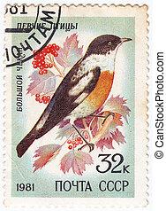 chekan, forevise, frimærke, stor, 1981, -, ussr, trykt, :, circa, fugl