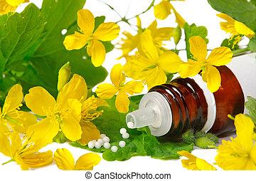 Chelidonium for homeopathy