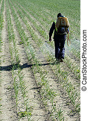 Chemical human application, onion fields