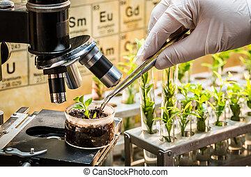 Chemical laboratory exploring new methods of plant breeding