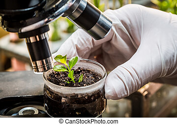 Chemical laboratory testing of pesticides on plants