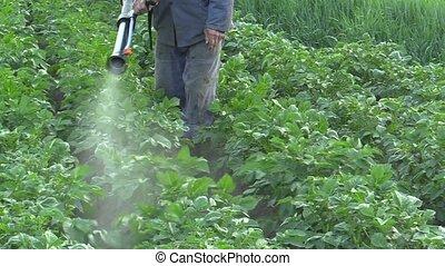 Chemical pesticide modern spray of Solanum tuberosum potato...