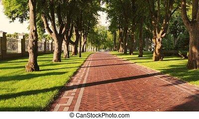 chemin, arbres., parc, pavé, rouges