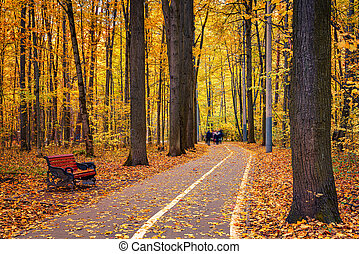 chemin, automne, parc