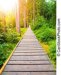 chemin bois, étroit, forêt verte