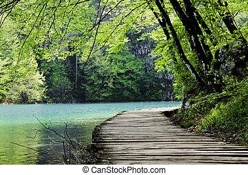 chemin bois, forêt lac