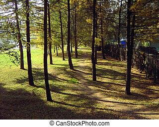 chemin, dans, parc ville