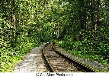 chemin fer, dans, forêt