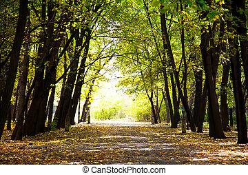 chemin, forêt, automnal