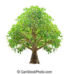 chemins, coupure, arbre, isolé, arrière-plan., included, blanc