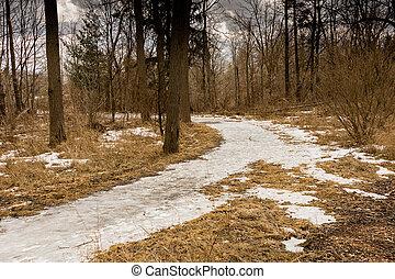 chemins, forêt, pièces, thawed, printemps