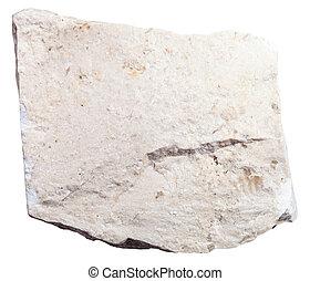 chemogenic Limestone mineral isolated on white - macro...