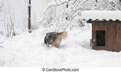 chenil, actif, neige, courses, cadre, chien, dehors
