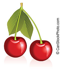 Cherries - Illustration of cherries