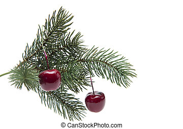 Cherries with fir branch