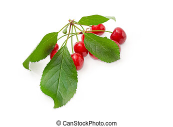 Cherries with leaves on a white background