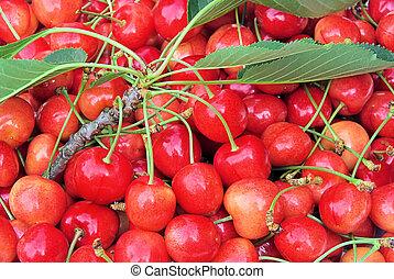 cherry 19