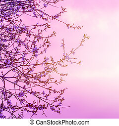 Cherry blooming over sunset