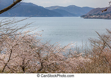 Cherry blossom and Ashi lake, Hakone, Japan