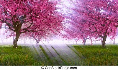 Cherry blossom and falling petals in slow motion - Peaceful...