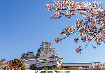 Cherry blossom and the Himeji castle in Japan