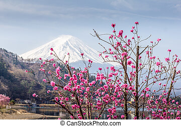 Cherry blossom and the Mount Fuji by the Ashi lake, Hakone, Japon