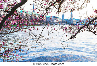 cherry blossom at Alster Lake in Hamburg with Jungfernstieg and townhall in background on sunny spring day