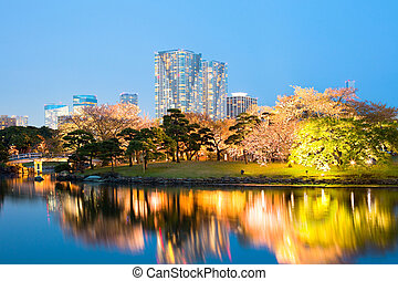 Cherry blossom at Hamarikyu (also Hama Rikyu) Gardens, Chuo Ward, Tokyo, Kanto Region, Honshu, Japan