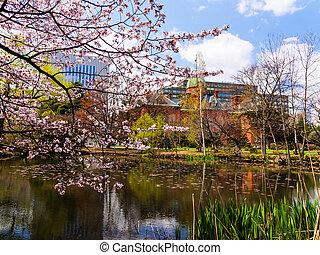 Cherry blossom at Hokkaido Government Office