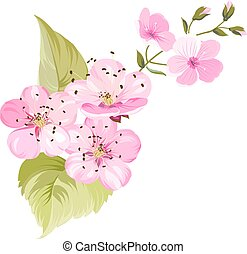 Cherry blossom. Blossom branch of pink sakura flowers. Japanese cherry tree. Beautiful pink cherry blossom flowers. Sacura isolated over white.Greeting or invitation card. Vector illustration
