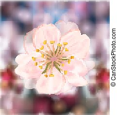 Cherry Blossom, Blurry Background