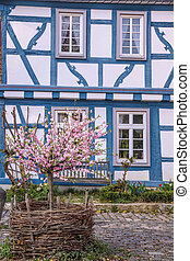 Cherry Blossom bush in front of half-timbered house
