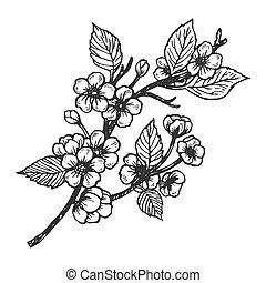 Cherry blossom engraving vector illustration. Scratch board...